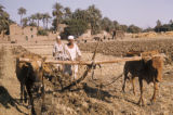 Egypt, plowing the fields