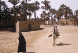 Egypt, road in a farm village