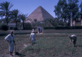 Giza (Egypt), men working in garden near Pyramid of Khufu