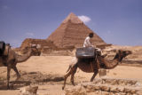 Giza (Egypt), riding a camel by Chephren Pyramid