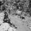 Morocco, young boy and cow on the banks of a stream in Ourika valley