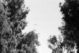 Egypt, view between trees of biplane in sky