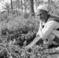 Libya, close-up of man harvesting alfalfa plants in Tājūrā'