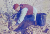 Libya, man planting sapling tree in desert soil