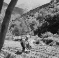 Morocco, farmer planting seeds on terraced hillside in Ourika valley