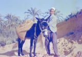 Libya, man with donkey hauling sand for irrigation dike in northeast Tripoli province