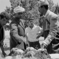 Morocco, men negotiating over sheep at animal marketplace in Marakesh