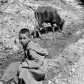 Morocco, young boy sitting with cow on roadside in Ourika valley