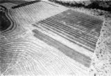 Kitale (Kenya), aerial view of fields with anti-erosion measures