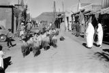 Morocco, shepherd leading sheep through village in Atlas Mountains