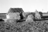 Morocco, boy standing outside hut covered with grasses