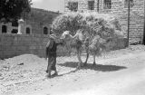 Egypt, man leading camel loaded with grain through dirt road in Cairo