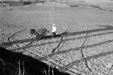 Morocco, bird's-eye view of farmer tilling land with plow in Middle Atlas mountains