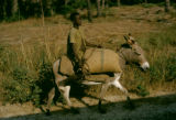 Senegal, boy riding mule