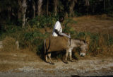 Africa, man and donkey on rural road