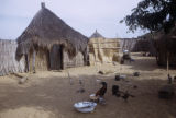 Senegal, chickens in village courtyard