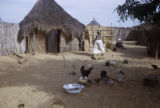 Senegal, woman and chickens in village courtyard