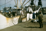 Senegal, men on fishing boat and catch of tuna