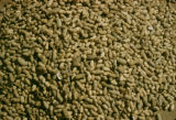 Africa, peanuts for export