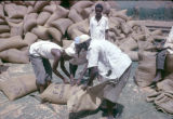 Nigeria, men bagging peanuts for export