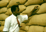 Nigeria, inspector checking bags of peanuts for export