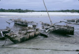 Tanzania, outriggers docked on shore