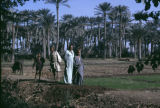 Egypt, farmers standing in field surrounded by palm trees