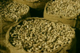 Nigeria, peanuts for export