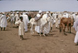 Sudan, people at cattle market in Umm Durmān