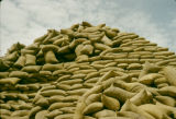 Nigeria, stacked bags of peanuts for export in Kano