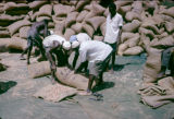 Nigeria, laborers handling bags of peanuts for export
