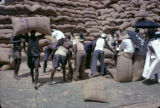 Nigeria, laborers hauling bags of peanuts for export