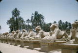 Egypt, Avenue of the Rams at Karnak leading to Temple of Amun