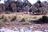 Tanzania, wild animals gathered in plain