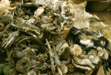 Nigeria, plant and animal parts for sale to make fetishes