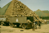 Nigeria, stacking bags of peanuts for export in Kano