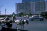 Cairo (Egypt), donkey cart outside the Hilton Hotel