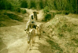 Nigeria, man with donkeys on trail in Kano