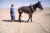 Tunisia, man using horse to pull water from village well