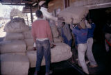 Africa, workers loading bags of tobacco onto truck