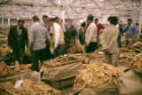 Zimbabwe, people inspecting tobacco at auction in Harare