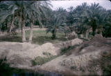 Tunisia, desert oasis with palm trees
