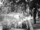 Paris (France), feeding swans and ducks at edge of pond in Bois-de-Boulogne park