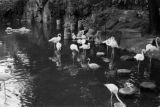 Germany, flamingos in exhibit at Berlin Zoo