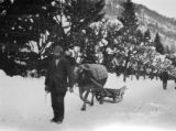 Switzerland, man leading ox-drawn sleigh in Engelberg