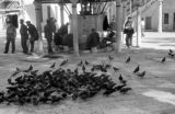 Turkey, group of pigeons next to wudu fountain at Eyüp Sultan Mosque, Istanbul