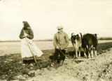 Poland, man and his aunt plowing with two cows