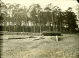Poland, pine forest on south side of highway