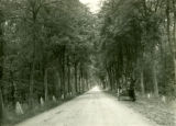 Poland, highway lined with trees, wagon on soft part of road