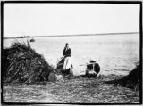 Belarus, woman standing in boat she is loading with grass for bedding